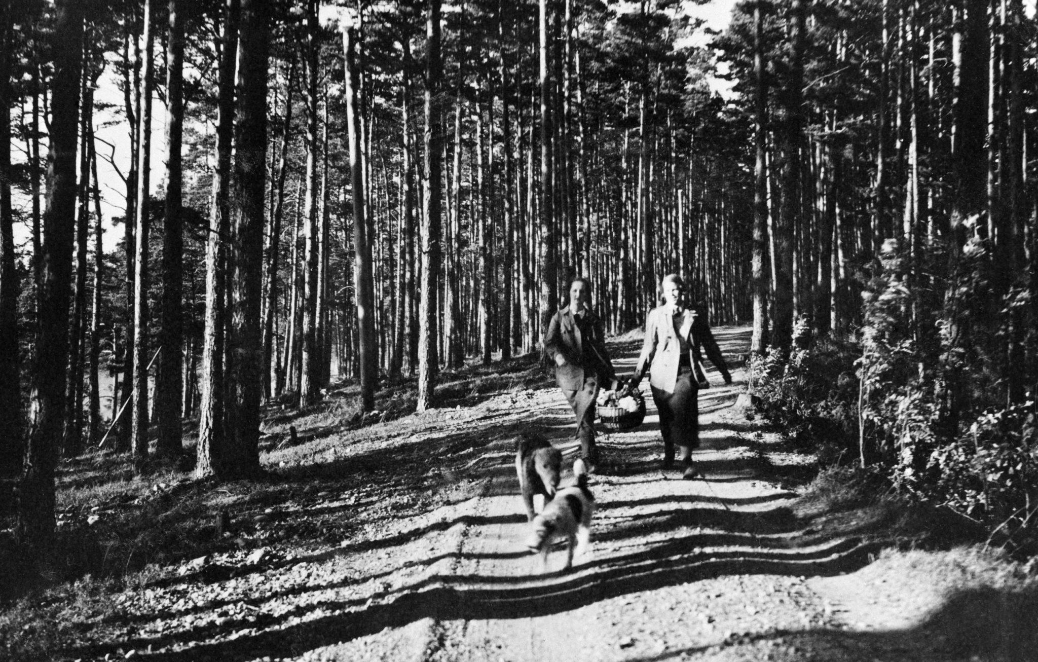 Kaksi naista ja kaksi koiraa kävelemässä Kallahdenharjulla 1935. Kuvaaja tuntematon, Helsingin kaupunginmuseo.